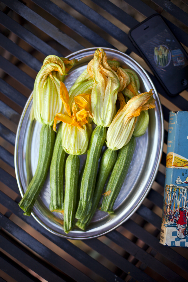 Courgette Flowers_5