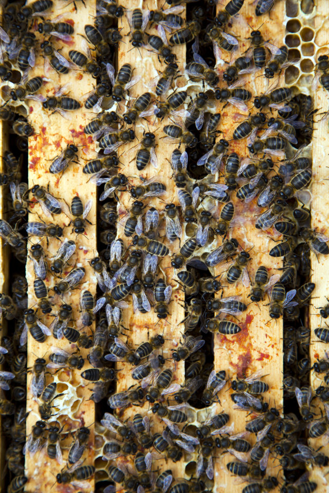 FEAST Apitherapy Honey_9