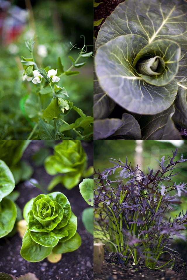 Kitchen Garden July 2013_2 copy