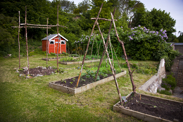 Kitchen Garden June 2013_3
